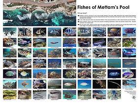 fish poster.jpg