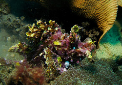Dive (18)