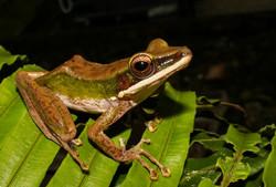 Borneo (29)