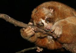 Borneo (19)