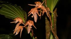 Borneo (8)