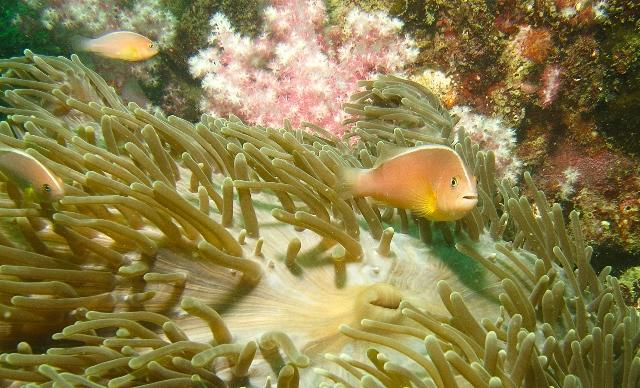 Dive (5)