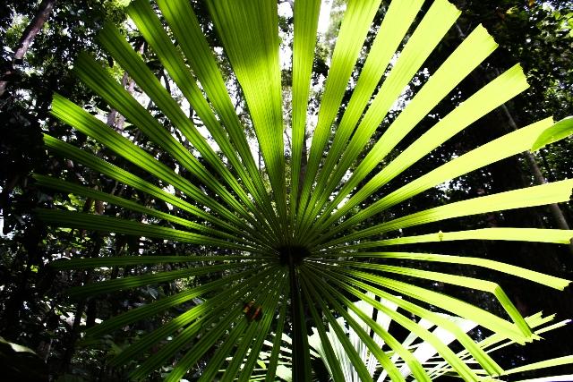 Borneo (24)