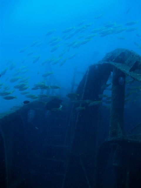 Dive (12)