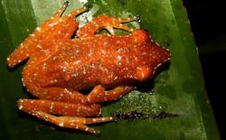 Borneo (26)