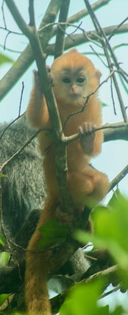 Borneo (7)