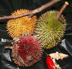 Borneo (39)