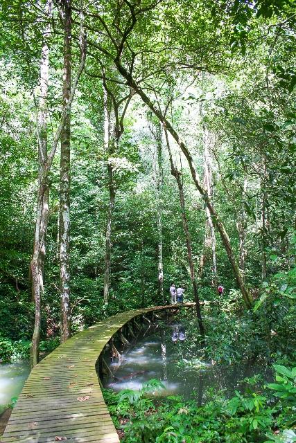 Borneo (41)