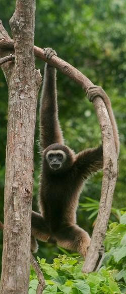 Borneo (17)