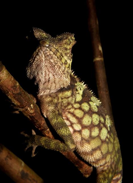 Borneo (34)