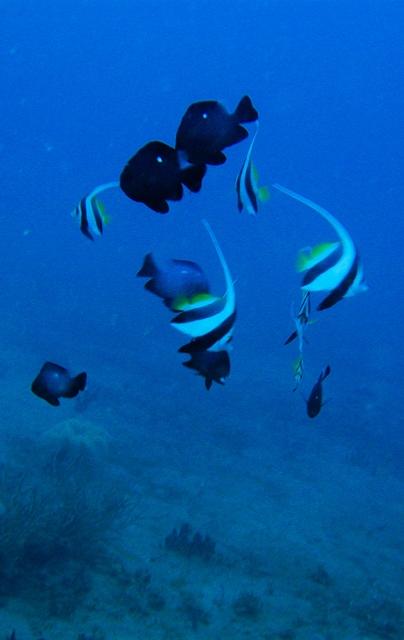 Dive (20)