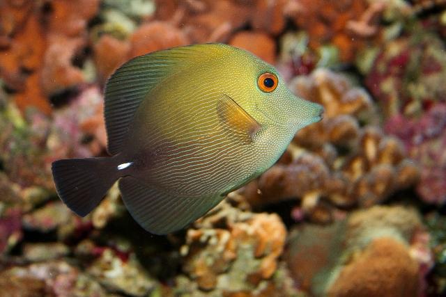 Dive (10)