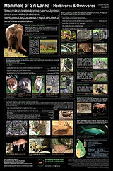 Herbivorous Mammals of Sri Lanka