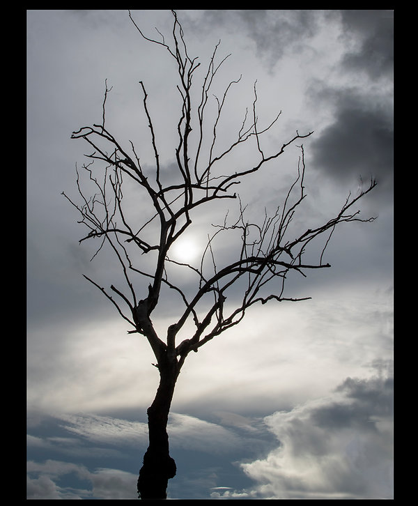 Tree before the storm.jpg