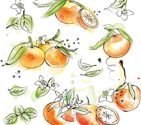 Watercolour Bergamot by Vicky Faulkner Design