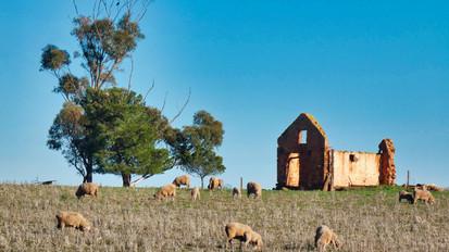 sheep ruins.jpg