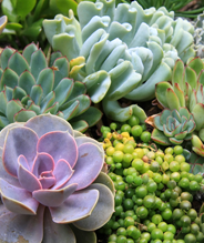 Selection of succulents