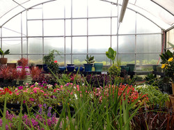 View from the greenhouse