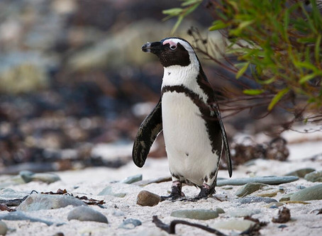 Penguins and Prisons