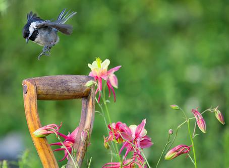Birding Still Allowed