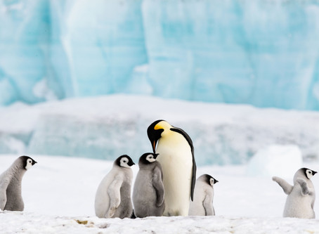 Penguins and Adventure