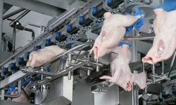 Poultry processing equipment Cutting