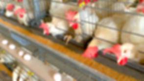 Tecno layer cage