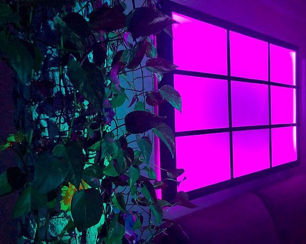8 Tree Lightbox Installation.jpg