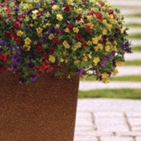 mini petunis (3 kleuren in 1 pot) Calibrachoa parviflora Cabaret
