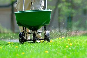 Fertilization, weed contro.jpg