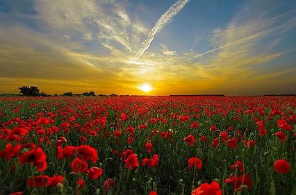 sunset-815270_640.jpg