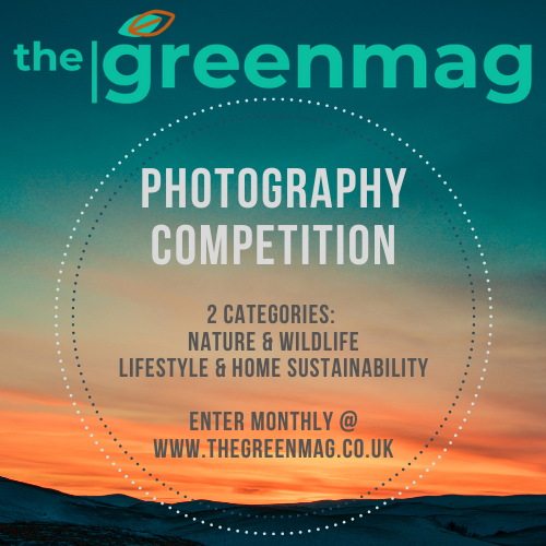 Photography Competition v2.png