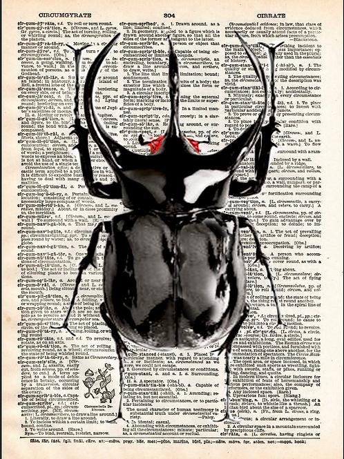 Rhino Beetle - AW00587
