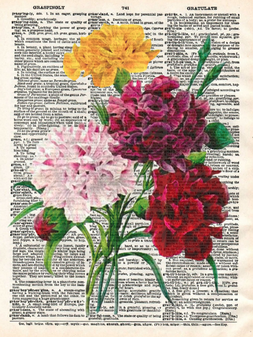 Carnations - AW00174