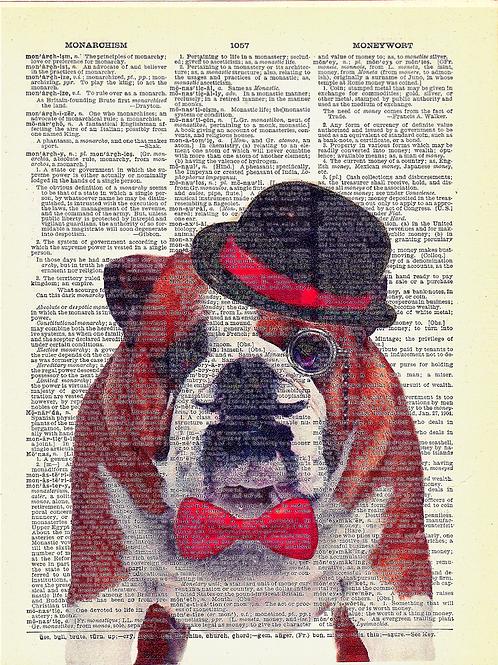 Bulldog - AW00069