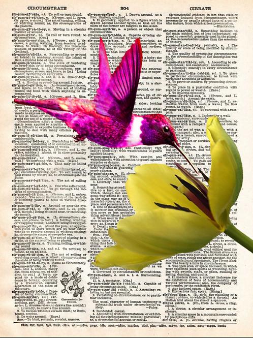 Humming Bird - AW00448