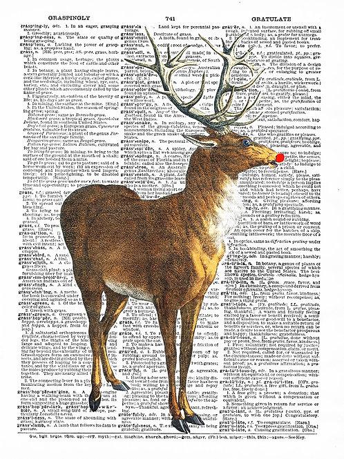 Rudolph - AW00276