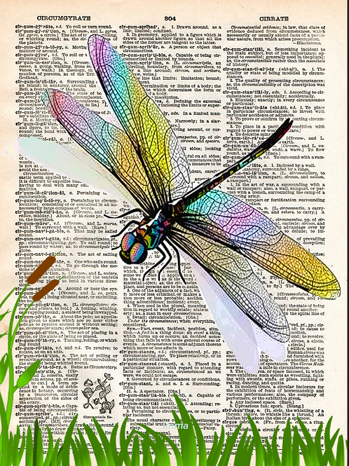 Dragonfly - AW00586