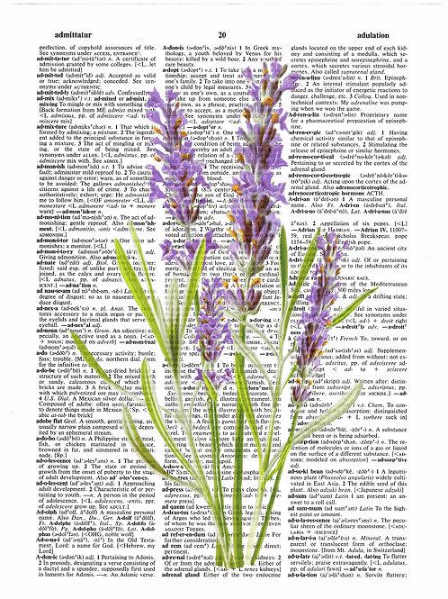 Lavender - AW00178