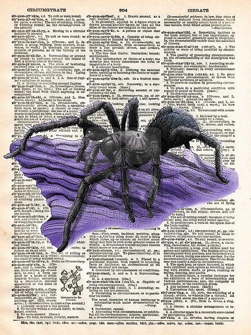 Tarantula - AW00588