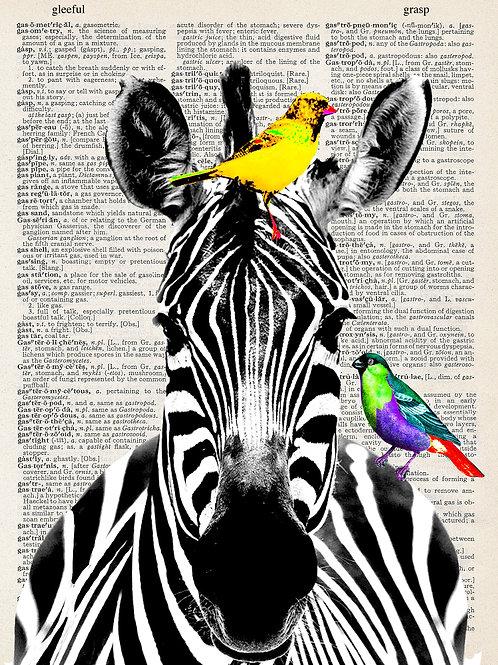 Zebra - AW00036