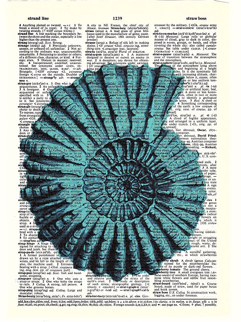 Ammonite Shell - AW00256