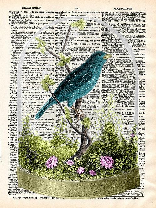 Bird Under Glass - AW00038