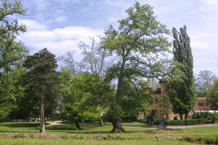 Terrazze e parco  - 4.jpg