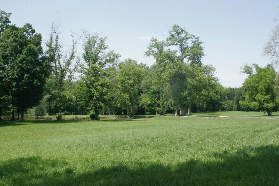Terrazze e parco  - 6.jpg