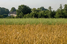 Country house near field of cereals clos