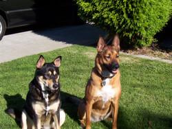 Sheena and Bella