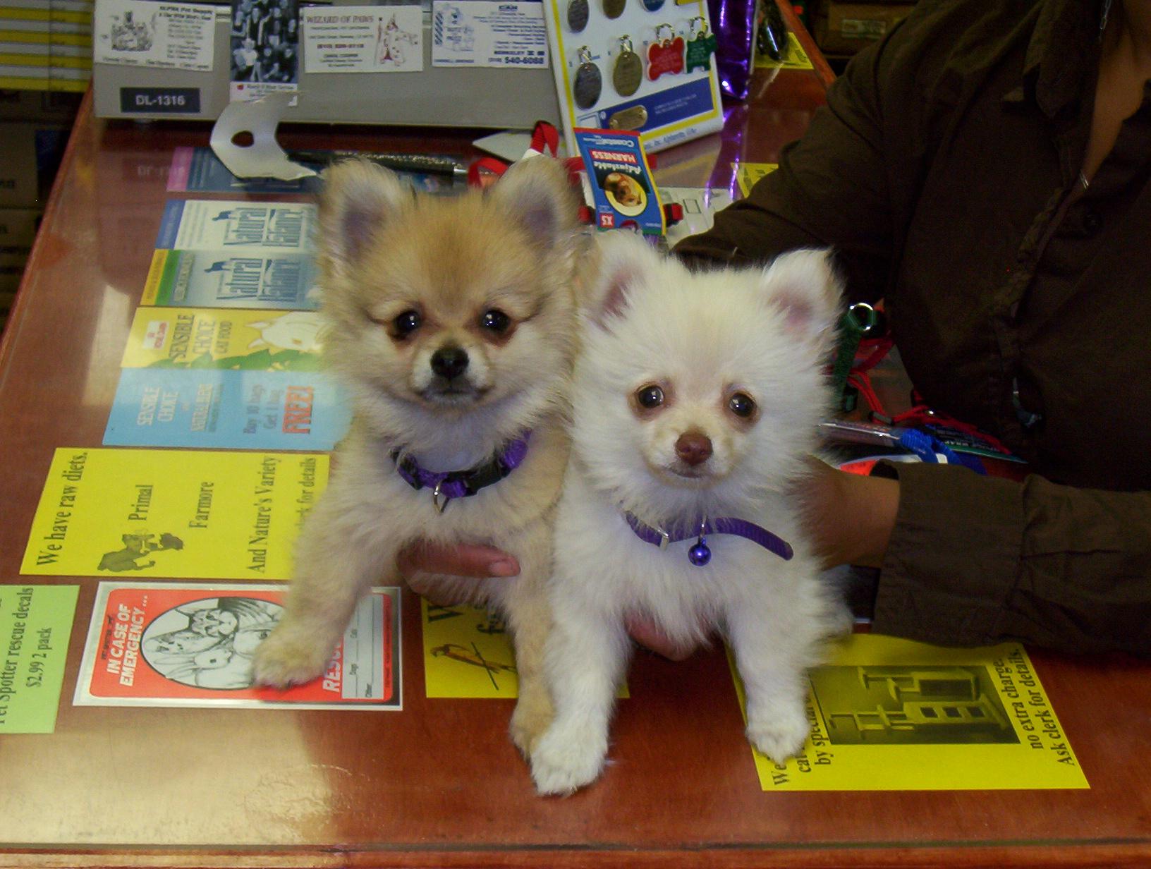Rocco & Violet
