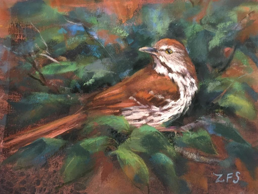 Schumaker_Brown Thrasher