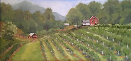 Dolamore Young Orchard 1224.jpg